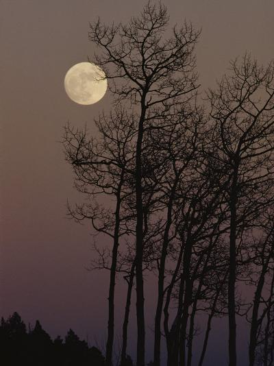 A Cluster of Aspens is Silhouetted against the Evening Sky-George F^ Mobley-Photographic Print