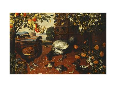 A Cock, a Hen and Chicks in a Yard-Thomas Hiepes-Giclee Print