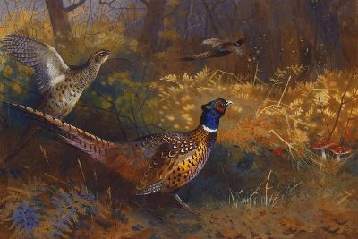 A Cock and Hen Pheasant at the Edge of a Wood, 1897-Archibald Thorburn-Giclee Print