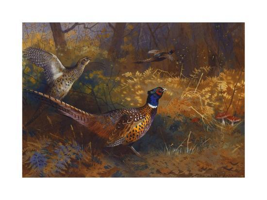A Cock and Hen Pheasant at the Edge of a Wood-Archibald Thorburn-Giclee Print