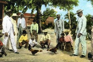 A Cock Fight, Puerto Rico, 1909