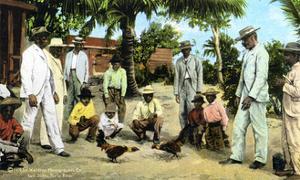 A Cock Fight, Puerto Rico, 1909