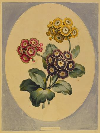 https://imgc.artprintimages.com/img/print/a-collection-of-flowers-drawn-after-nature-and-disposed-in-an-ornamental-and-picturesque-manner_u-l-pemqoc0.jpg?p=0