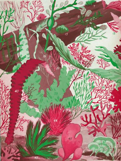 'A Collection of Over Fifty Species of Red, Green and Brown Seaweeds', 1935-Unknown-Giclee Print