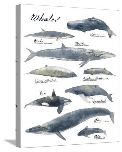 A Collection of Whales-Ken Hurd-Stretched Canvas Print