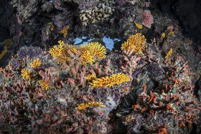 A Colorful Coral Reef Grows Along a Deep Dropoff in the Solomon Islands-Stocktrek Images-Photographic Print