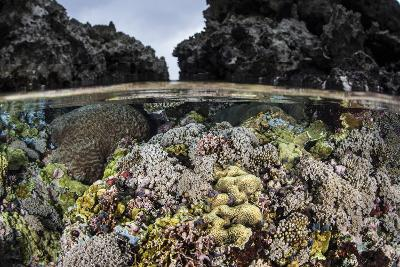 A Colorful Coral Reef Grows in Shallow Water in the Solomon Islands-Stocktrek Images-Photographic Print