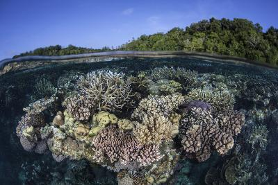 A Colorful Coral Reef Grows in the Solomon Islands-Stocktrek Images-Photographic Print