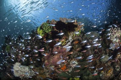 A Colorful Coral Reef Is Covered by Fish in Indonesia-Stocktrek Images-Photographic Print