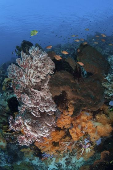 A Colorful, Healthy Coral Reef Thrives in Indonesia-Stocktrek Images-Photographic Print