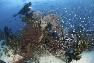 A Colorful Reef Scene in North Komodo, Indonesia-Stocktrek Images-Photographic Print