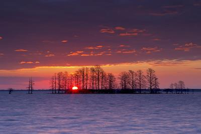 A Colorful Sunrise Over Silhouetted Cypress Trees in Lake Mattamuskeet-Robbie George-Photographic Print