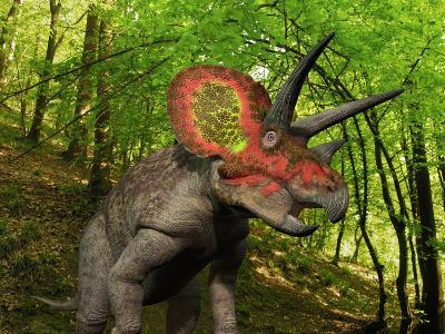 A Colorful Triceratops Wanders a Cretaceous Forest-Stocktrek Images-Photographic Print