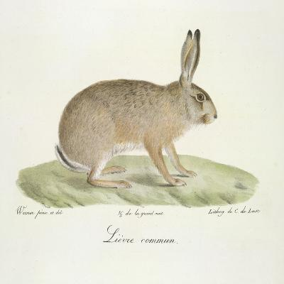 A Common Hare-Werner-Giclee Print