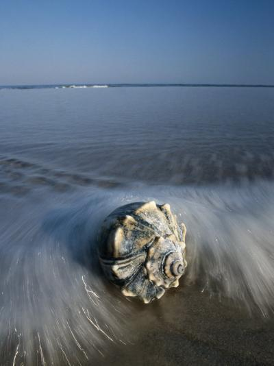 A Conch Shell Washed up on Shore-George Grall-Photographic Print