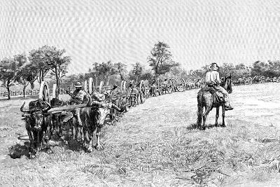 A Convoy of Wagons, South America, 1895--Giclee Print