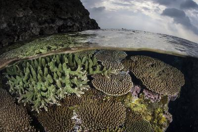 A Coral Reef Grows in Shallow Water in the Solomon Islands-Stocktrek Images-Photographic Print