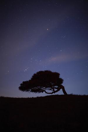https://imgc.artprintimages.com/img/print/a-cork-tree-in-silhouette-against-the-night-sky-between-castelsardo-and-tempio-pausania_u-l-pil7mx0.jpg?p=0