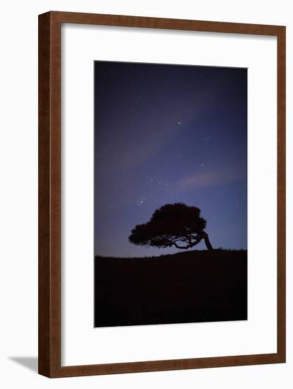 A Cork Tree in Silhouette Against the Night Sky Between Castelsardo and Tempio Pausania-Dave Yoder-Framed Photographic Print