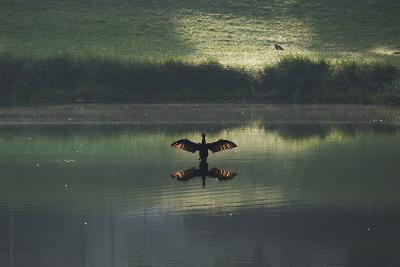 A Cormorant (Phalacrocorax Auritus) Stretches its Wings to Dry Them During Sunrise-Alex Saberi-Photographic Print