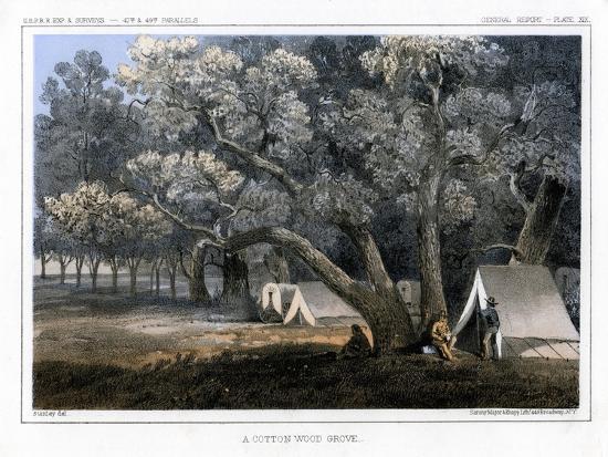 A Cotton Wood Grove, 1856-John Mix Stanley-Giclee Print