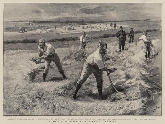 A Coveted Privilege, Convict Gangs Haymaking-William Small-Giclee Print