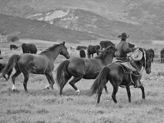 A Cowboy Herding Cattle in Field-Robbie George-Photographic Print