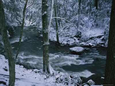 A Creek Rushes by in a Snow-Covered Forest-Stephen Alvarez-Photographic Print