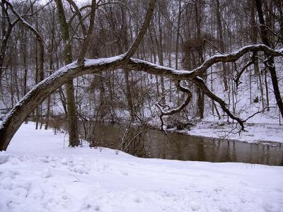A Curved Tree Frames Rock Creek During a Winter Snow Storm-Stephen St^ John-Photographic Print