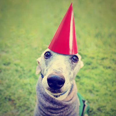A Cute Dog in a Local Park with a Birthday Hat-graphicphoto-Photographic Print