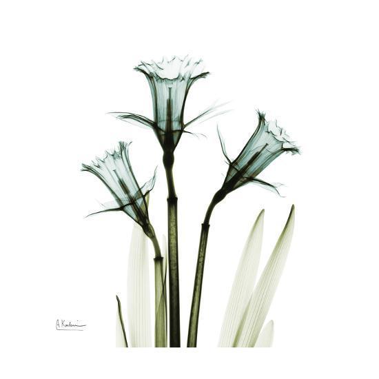 A Daffodil Day-Albert Koetsier-Premium Giclee Print