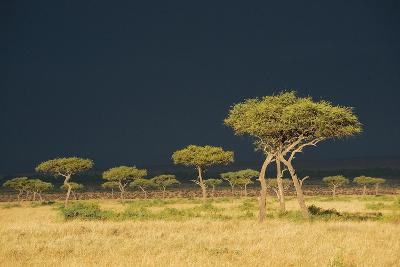 A Dark Stormy Sky over a Landscape with Acacia Trees-Bob Smith-Photographic Print