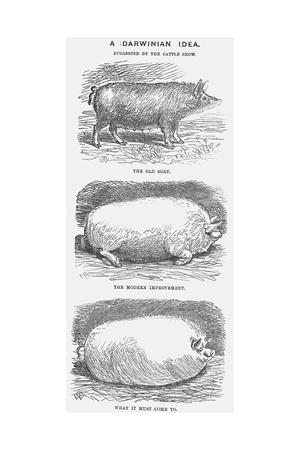 A Darwinian Idea, 1865-TW Woods-Giclee Print