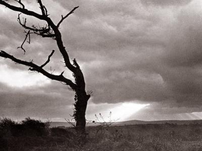 A Dead Tree is Silhouetted Against the Suns Rays on Heath Land, 1935