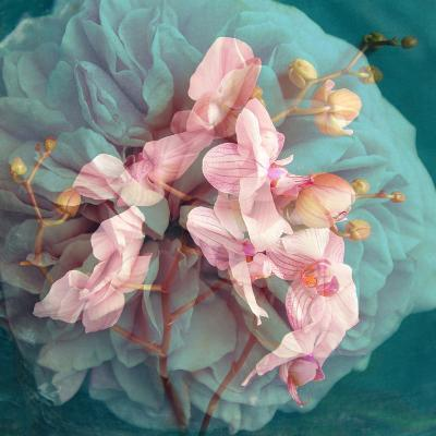 A Delicate Floral Montage from Blooming Orchids and Rose-Alaya Gadeh-Photographic Print