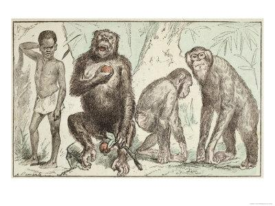 "Evolution of Man from Mammals, from ""La Creation Naturelle Et Les Etres Vivants"""