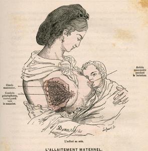 Mother Breastfeeding 19C by A. Demarle