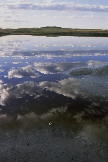 A Depredated American Avocet Egg on a Sandhills Lakeshore-Michael Forsberg-Photographic Print