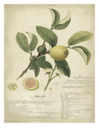 Descube Botanical I
