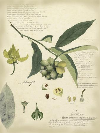 Descube Botanical II