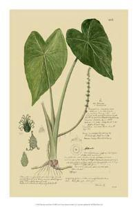 Aroid Plant I by A^ Descubes