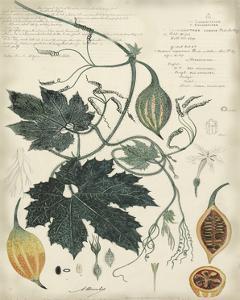 Botanical I by A. Descubes