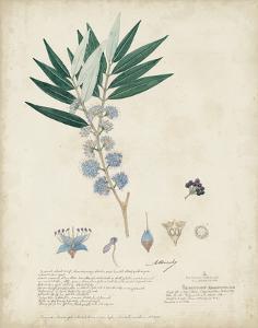 Delicate Blue Descubes I by A. Descubes