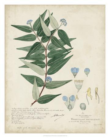 Delicate Blue Descubes II