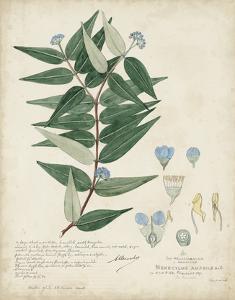 Delicate Blue Descubes II by A. Descubes