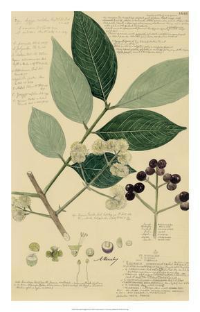 Descubes Foliage & Fruit I