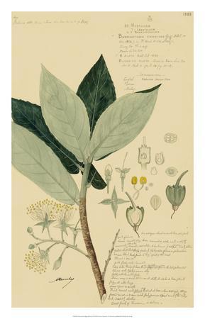 Descubes Foliage & Fruit III