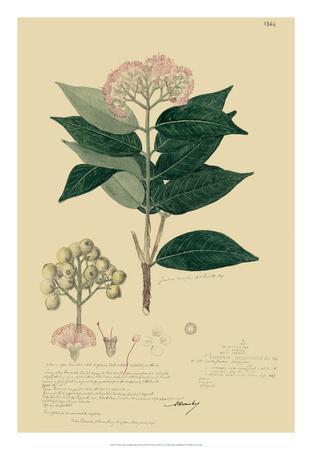 Descubes Tropical Botanical I