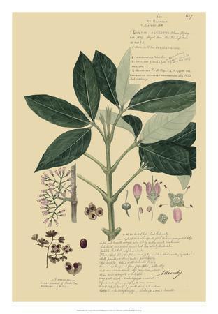 Descubes Tropical Botanical II