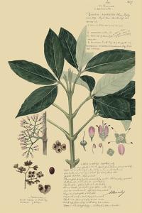 Descubes Tropical Botanical II by A. Descubes